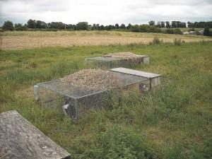 élevage naturel des lapins